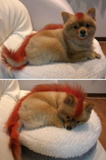 The real Firefox